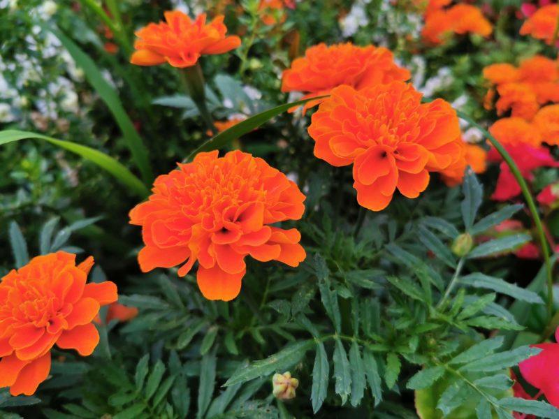 HUAWEI P30 Proのスーパーマクロで撮影した花